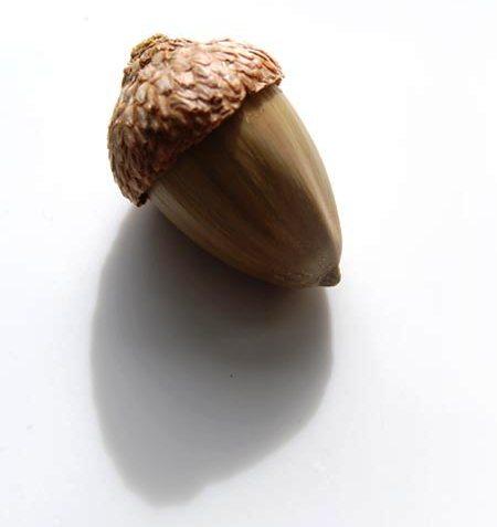 acorn-socity